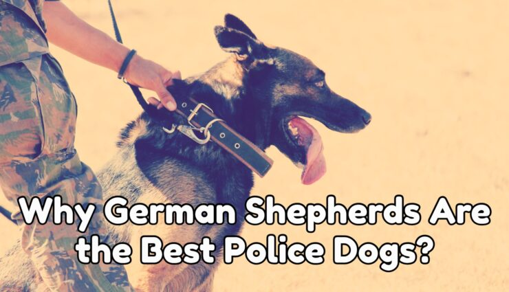 Why German Shepherds Are the Best Police Dogs