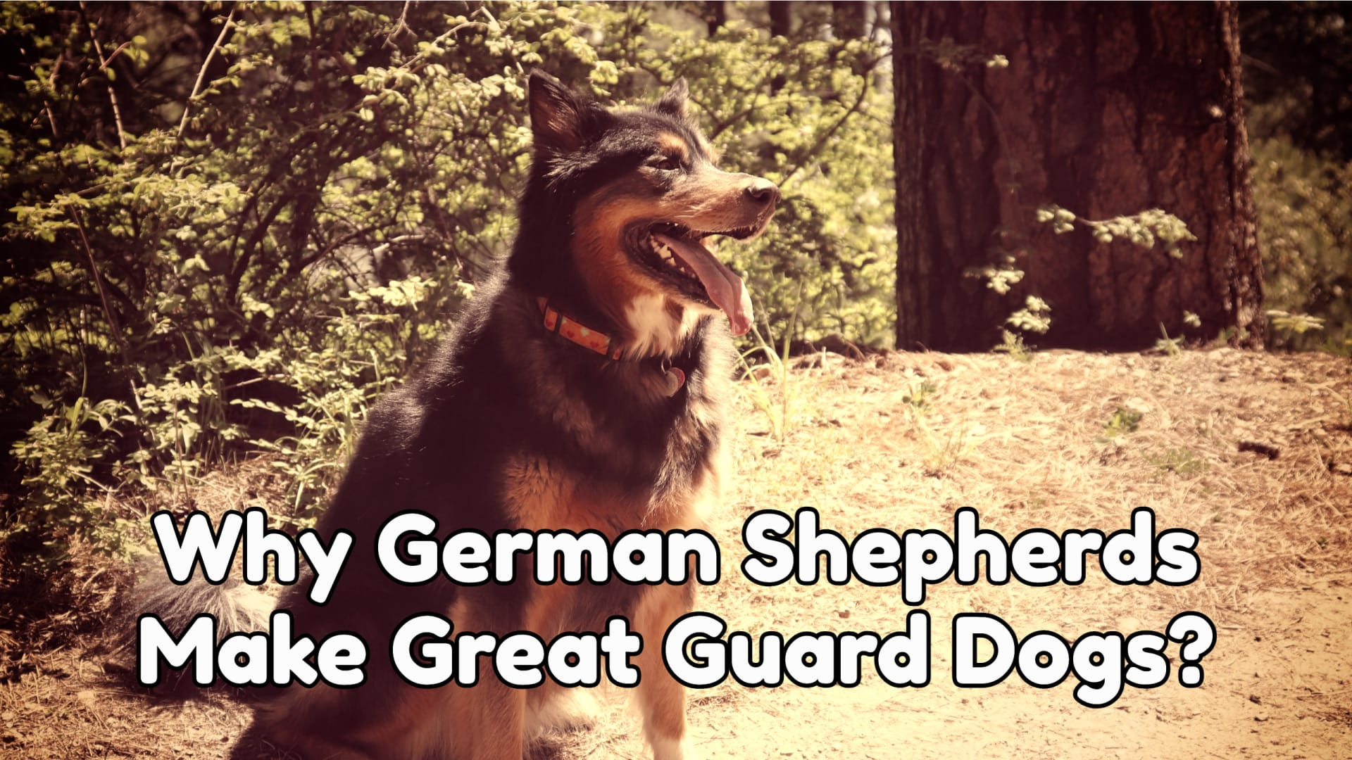 Why German Shepherds Make Great Guard Dogs
