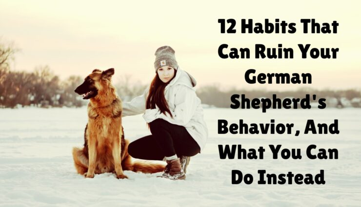 12 Habits That Can Ruin Your German Shepherd's Behavior, And What You Can Do Instead