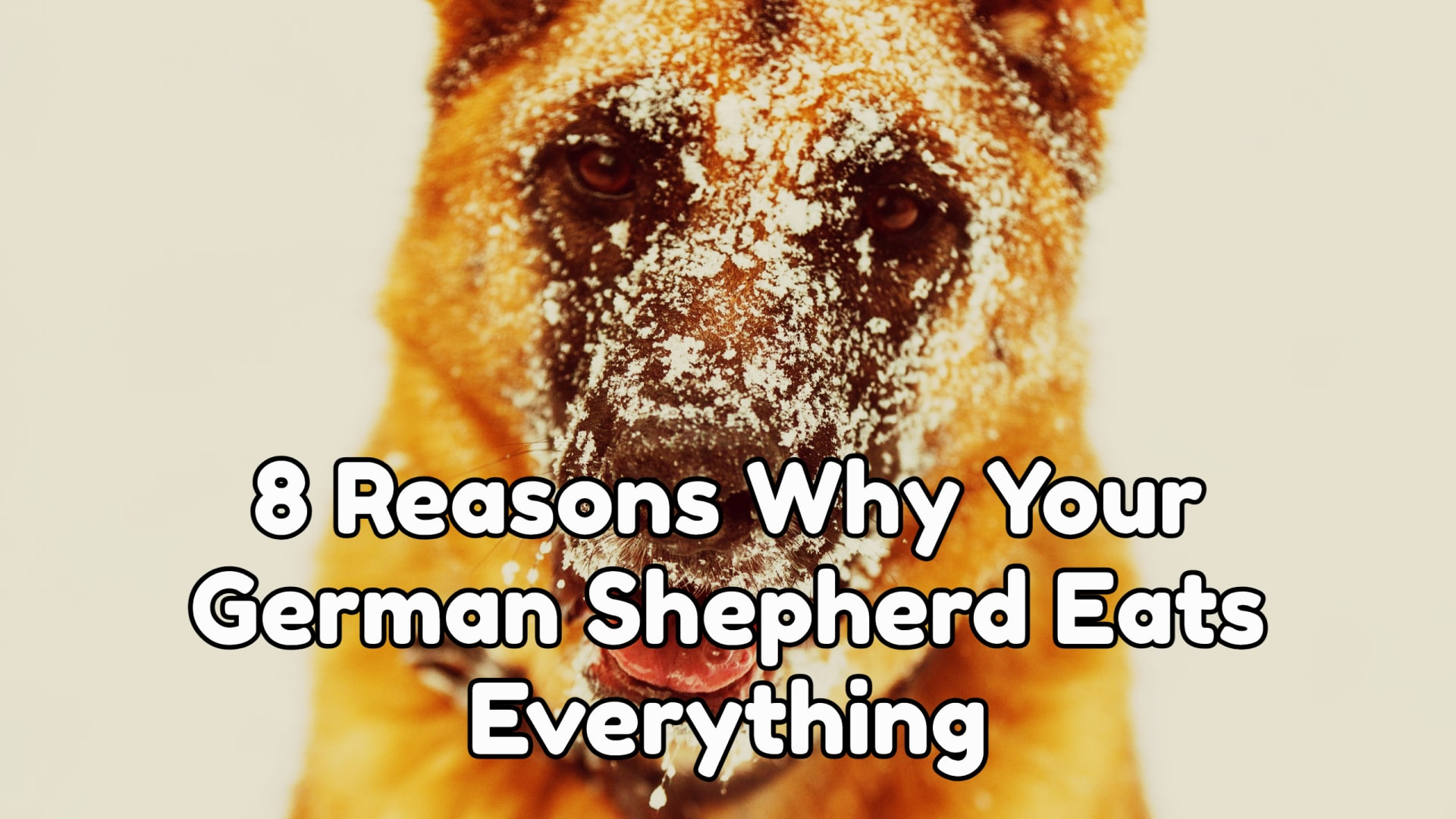 8 Reasons Why Your German Shepherd Eats Everything