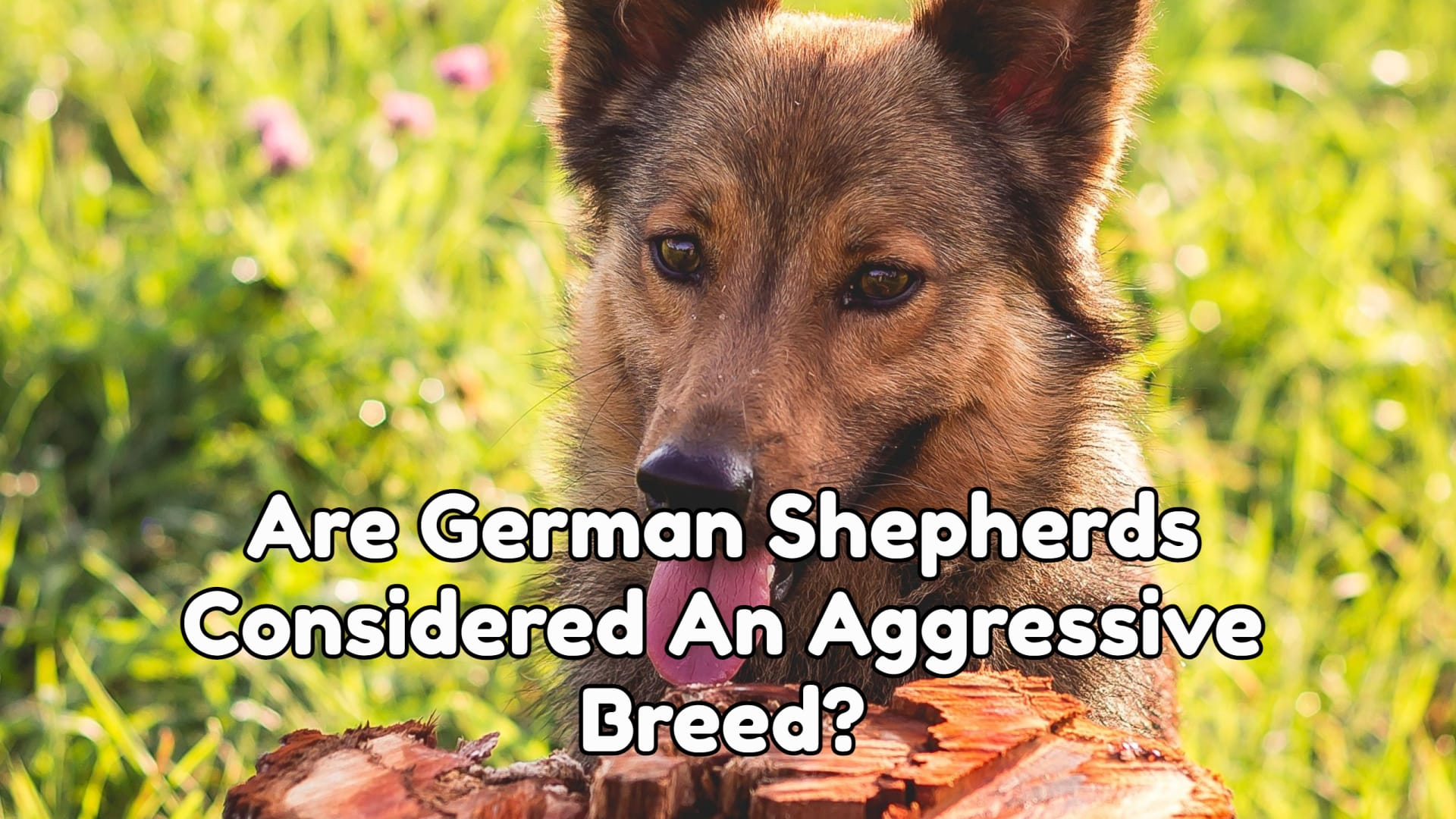 Are German Shepherds Considered An Aggressive Breed
