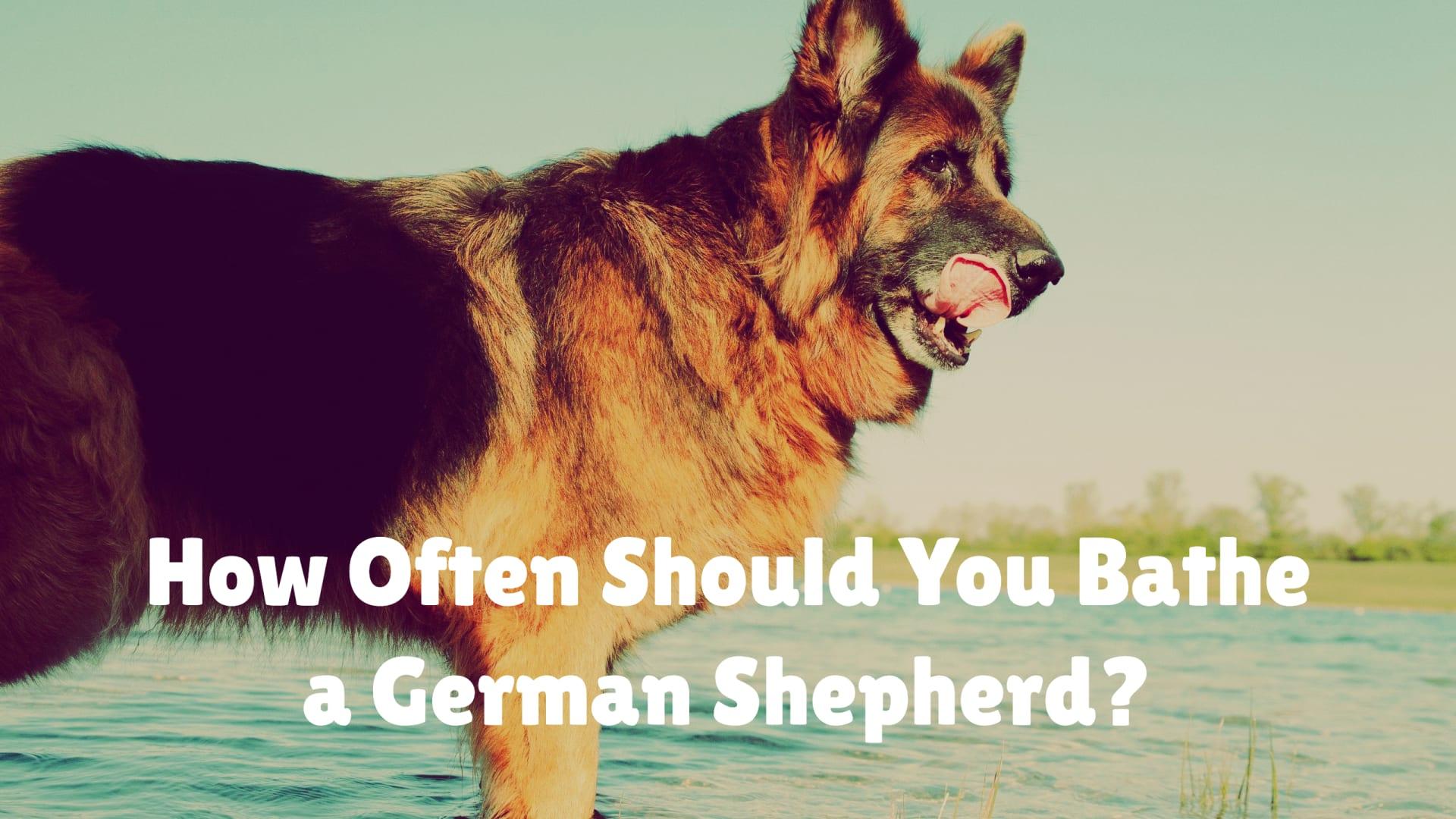 How Often Should You Bathe a German Shepherd?