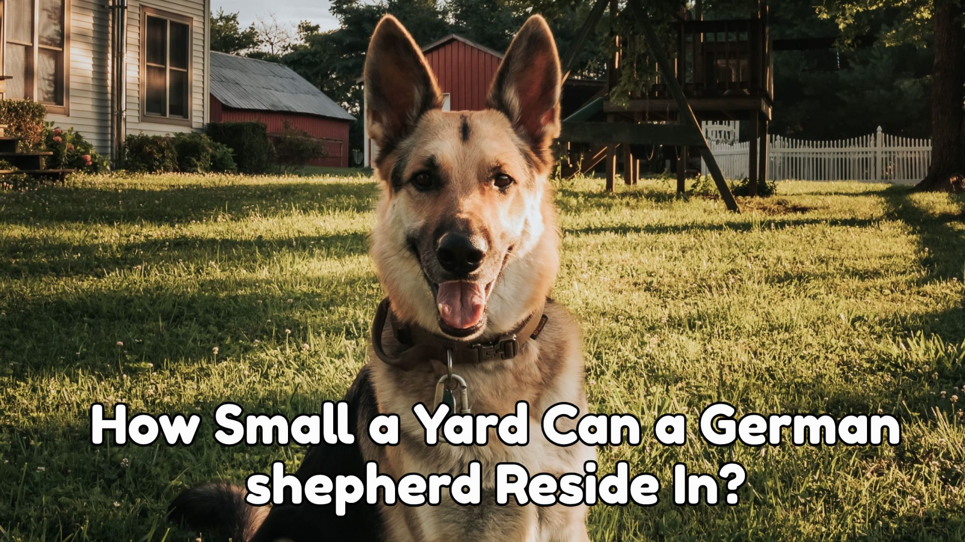 How Small a Yard Can a German shepherd Reside In?