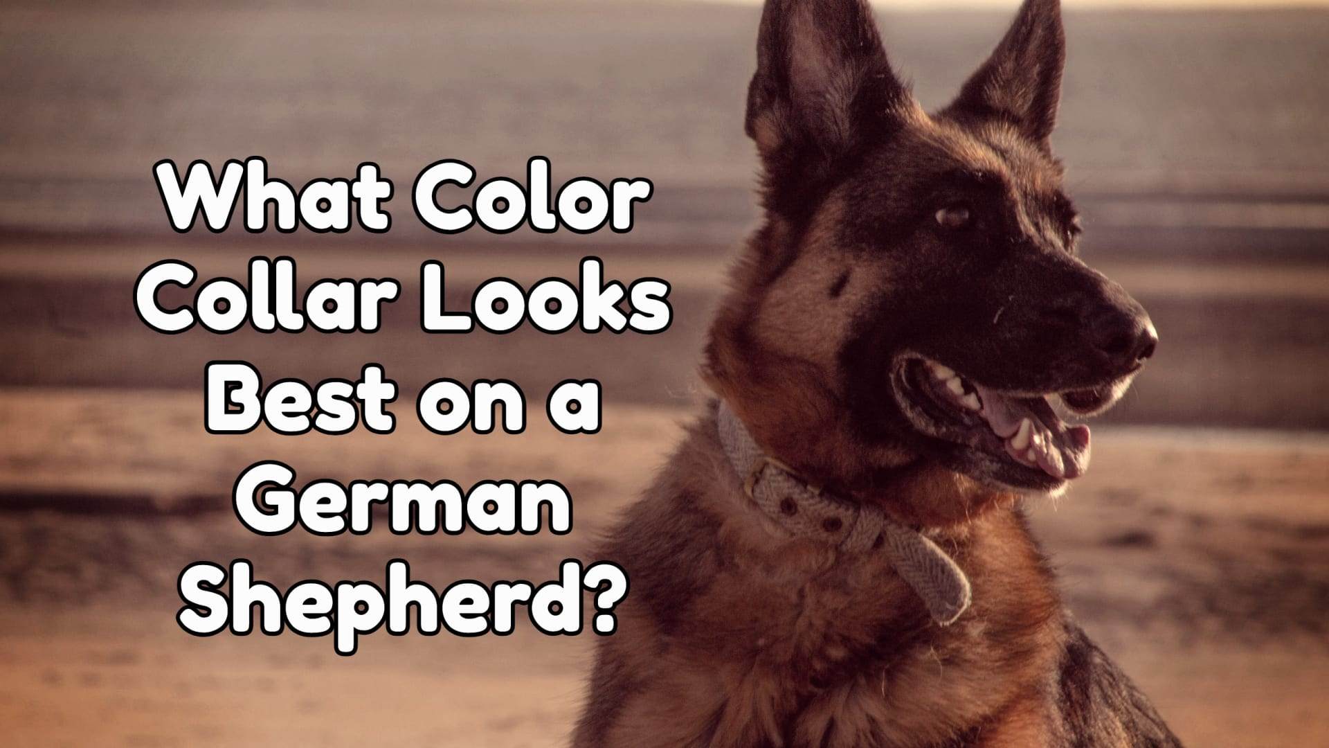What Color Collar Looks Best on a German shepherd?