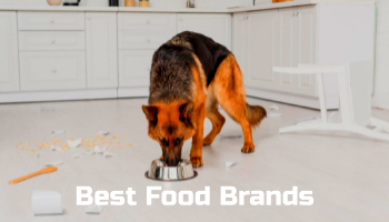 Best food brands for GSD