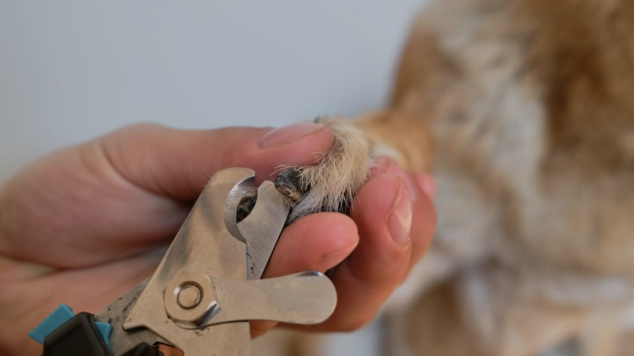 Best Dog Nail Clippers For German Shepherds